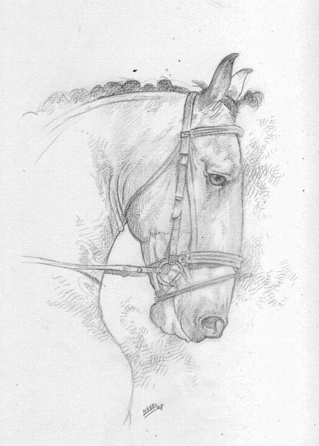C novel dessins chevaux - Main dessin crayon ...