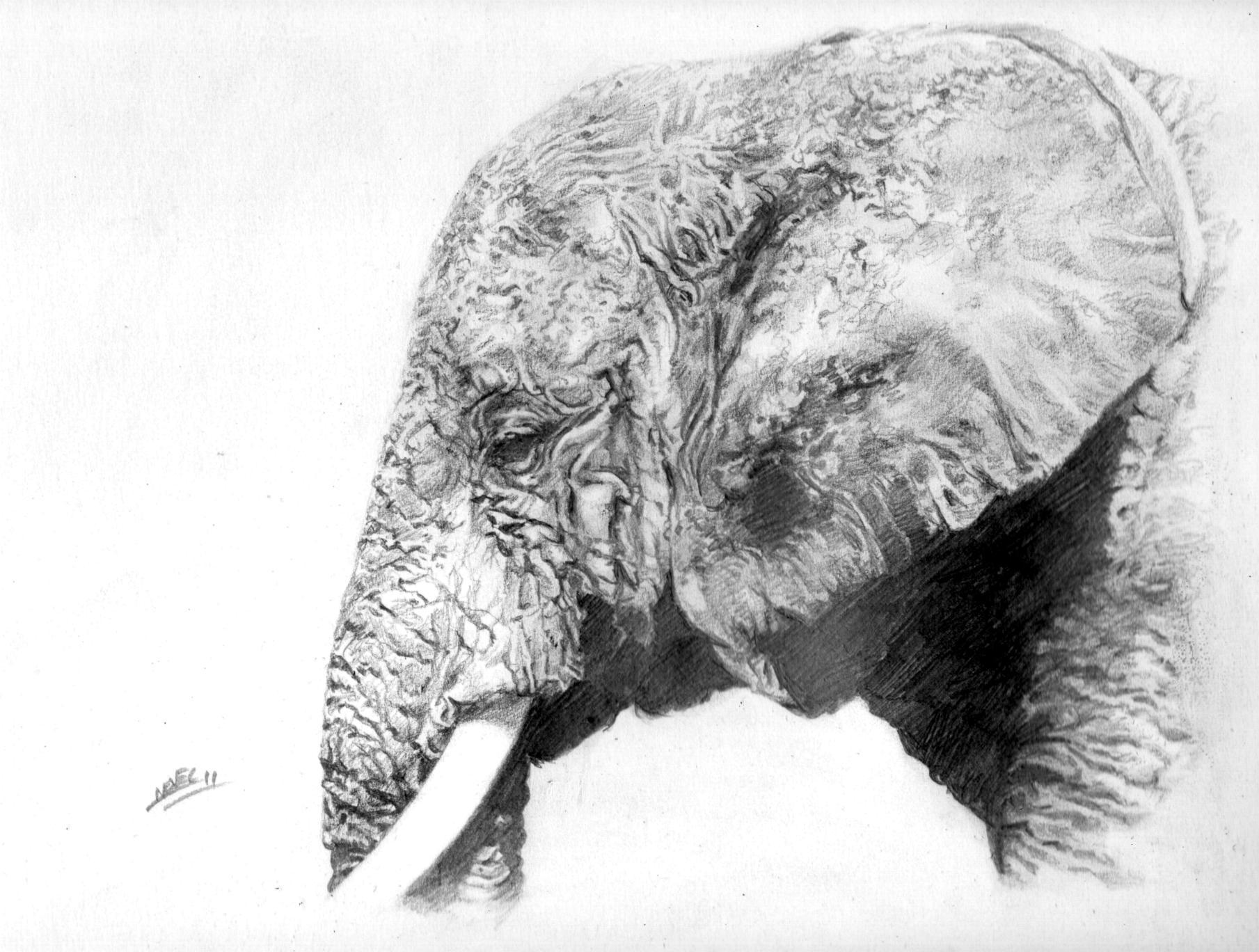 C Novel Dessins Archive Du Blog Tete D Elephant 1