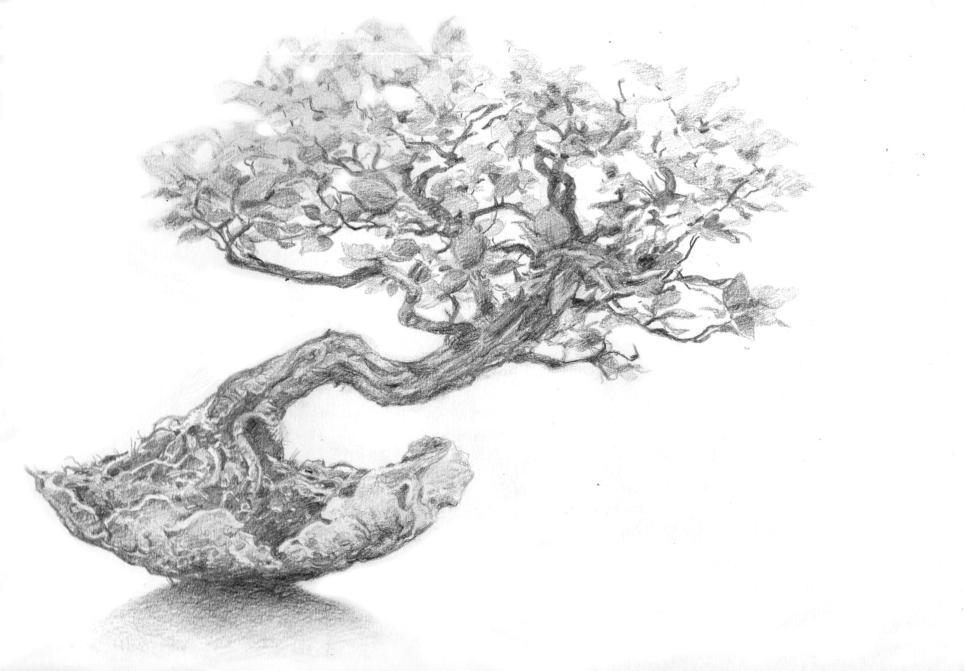 dessin arbres japonais