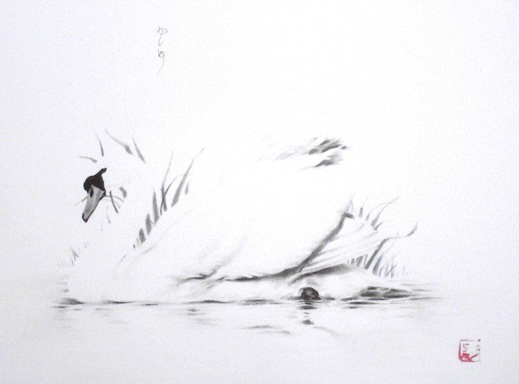 Cygne & lac dans animaux HPIM06453-1024x757