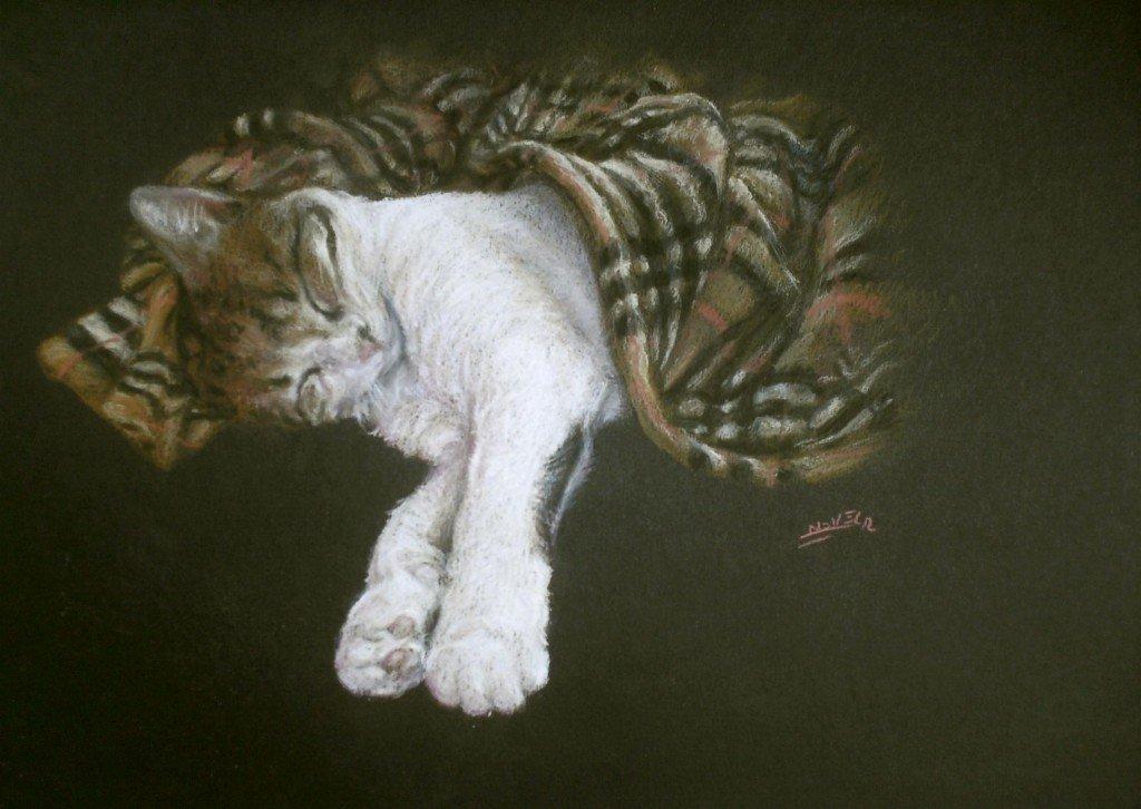 Chat qui dort dans animaux HPIM1051-1024x726