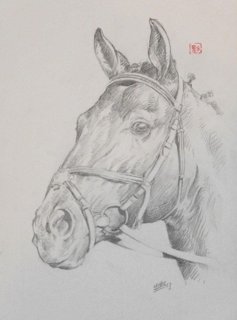 Tête de cheval dans chevaux p5060088-758x1024