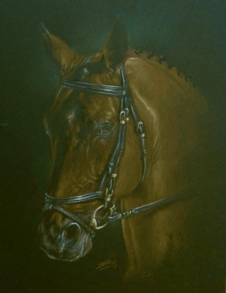 Pur-sang arabe dans chevaux p5240099-791x1024