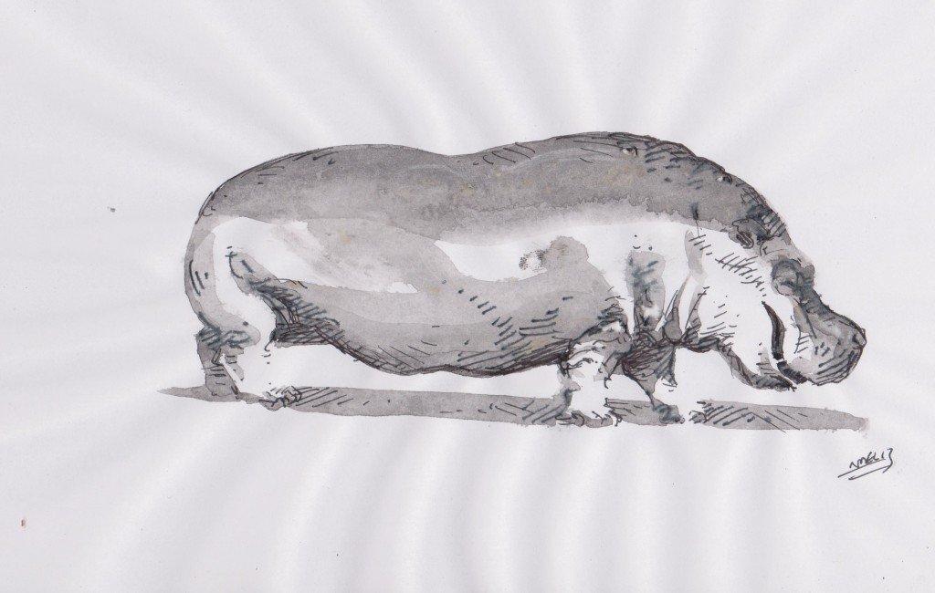 Croquis d'hippopotame dans animaux ffg001-1024x650