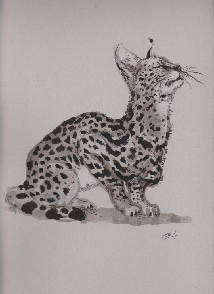 Croquis de serval dans animaux ffg002-744x1024