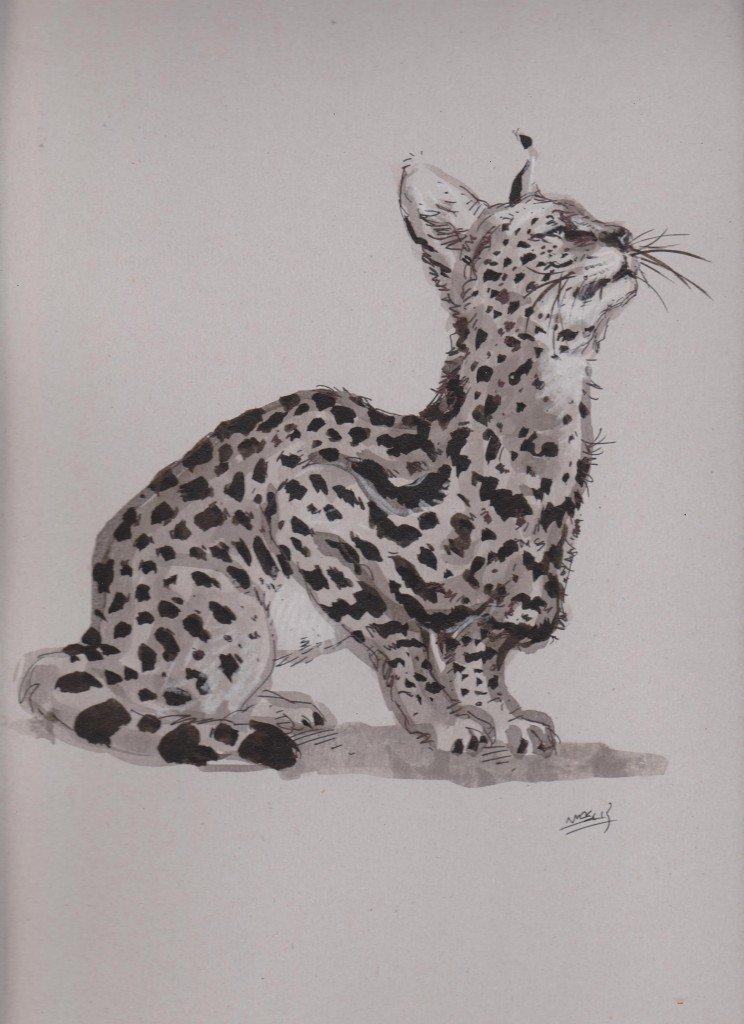 C novel dessins animaux - Croquis animaux ...