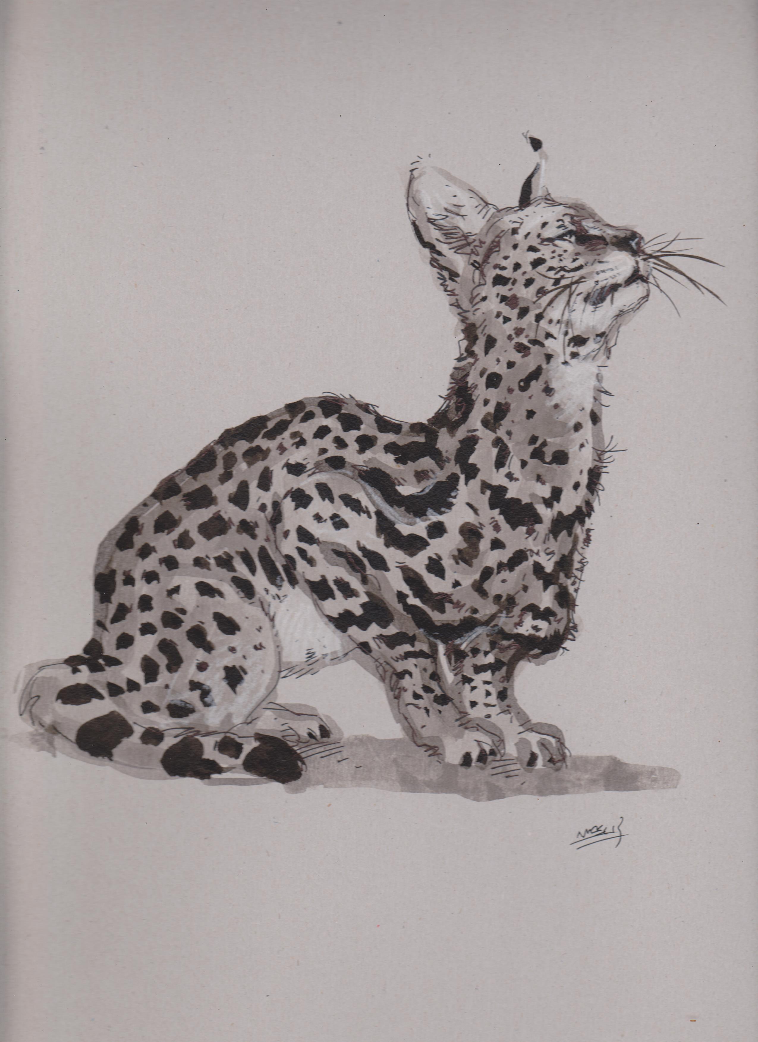 C novel dessins archive du blog croquis de serval - Croquis animaux ...